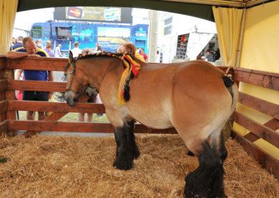 Libramont Agricultural Fair 16