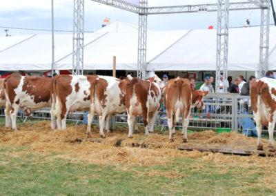 Libramont Agricultural Fair 18