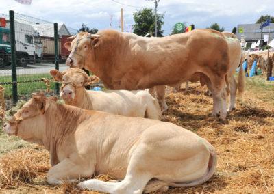 Libramont Agricultural Fair 20