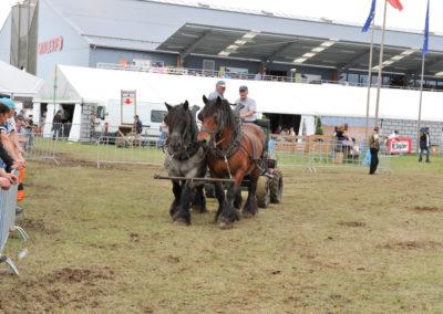 Libramont Agricultural Fair 21